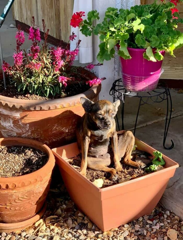 This Is Where My Mom's Dog Likes To Sit When She's In The Yard Gardening