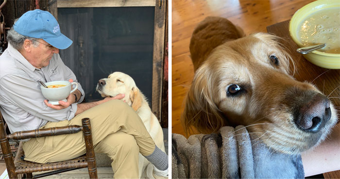 29 Dogs Making Faces To Let Their Owners Know How Much They Want Their Food