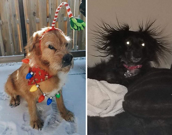 50 Moments Of Dogs Malfunctioning And Their Humans Failing To Resist The Urge To Document It For The #UnflatteringDogPhotoChallenge (New Pics)