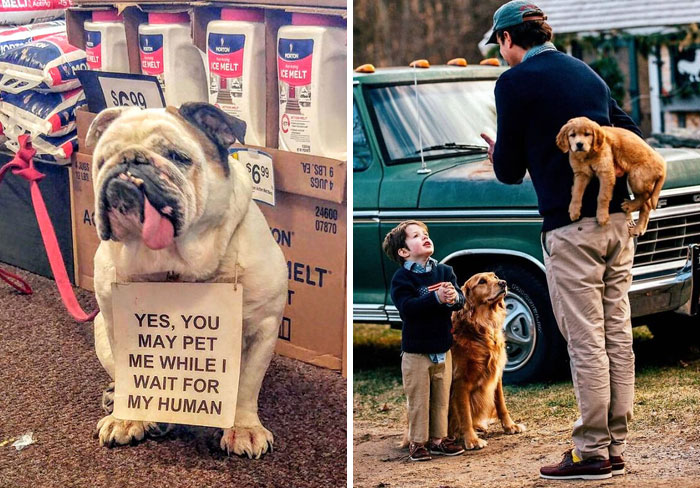 50 Uplifting Dog Posts To Make Your Day Better (New Pics)