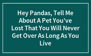 Hey Pandas, Tell Me About A Pet You've Lost That You Will Never Get Over As Long As You Live