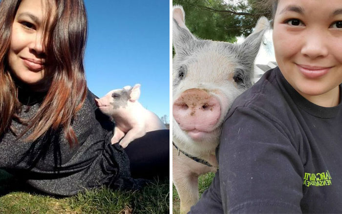 Vet Said Floppy Wouldn't Live Longer Than A Week And Recommended Putting Him Down, Now He Is 1.5 Years Old And A 500 Lb Indoor Pig