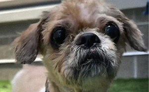 Rescue Dog Has 6.5 Pounds Of Matted Fur Shaved Off During A Life-Changing Makeover