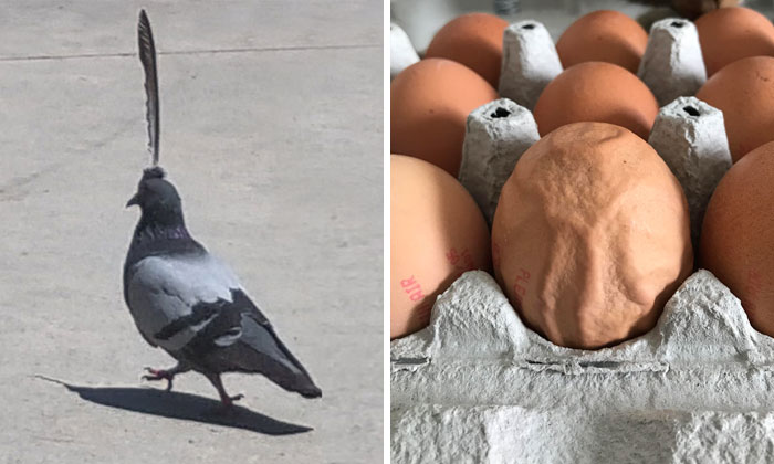 This Online Group Is Dedicated To 'Mildly Interesting' Stuff, And Here Are Their 50 Best Posts (New Pics)