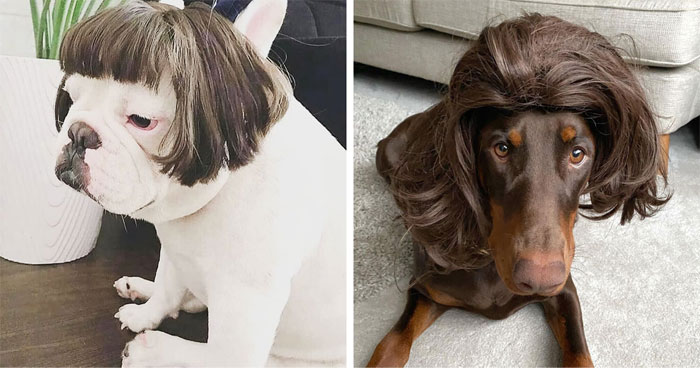 50 People Are Sharing Photos Of Their Dogs Wearing Wigs, And It's Absolutely Hilarious