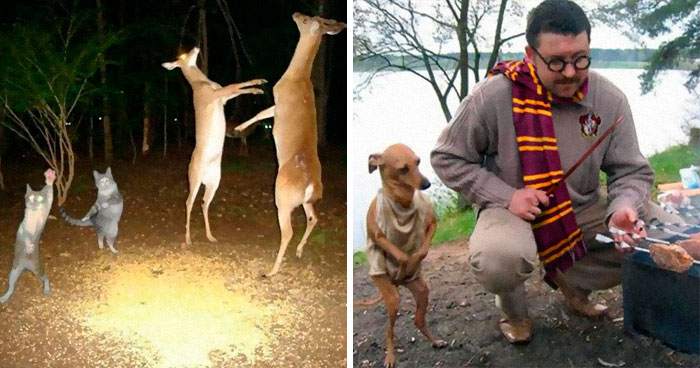 """50 Weird Animal Photos That """"Cannot Be Explained"""""""