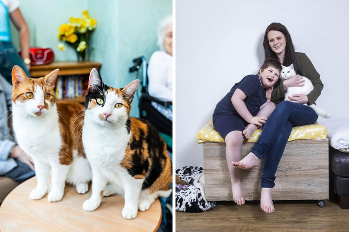 Here Are The Stories Of 12 Heroic Cats That Won The 'National Cat Awards'