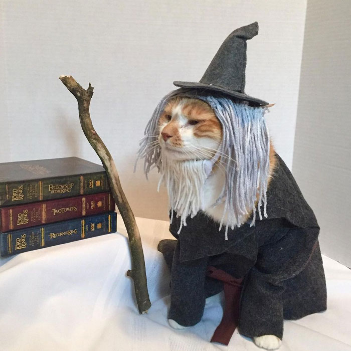 This Library Attracts The Public By Dressing Up One Librarian's Cat As Literary And Movie Icons (100 Pics)