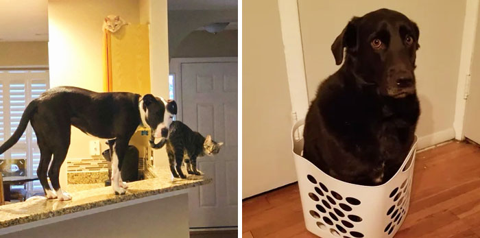 50 Dogs Who Forgot How To Dog But Definitely Know How To Cat (New Pics)