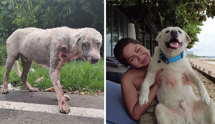 Hairless Dog Found By Gas Station Becomes A Fluffy, Lovable Giant