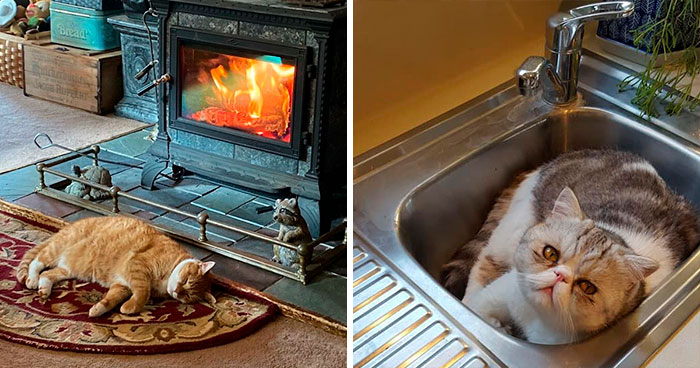 50 Of The Best 'My House, Not My Cat' Moments That Have Ever Happened To Humans (New Pics)