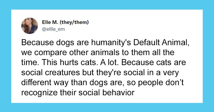 Cat Rescuer Explains How Cat Social Behavior Is Often Misinterpreted By 'Dog People'