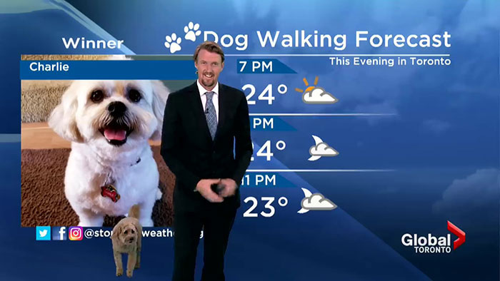 Good Boy Treats Audience With His Appearance During Toronto Weathercast By Asking Meteorologist For A Treat