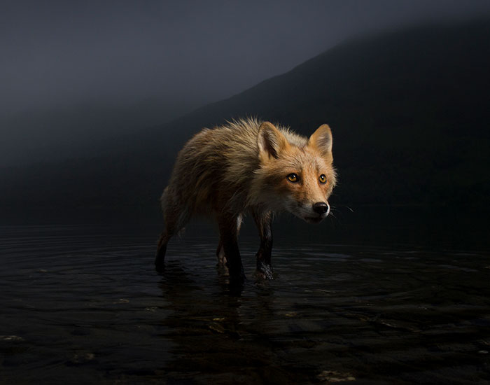 16 Of The Most Impressive Shots From The Wildlife Photographer Of The Year 2021 Contest